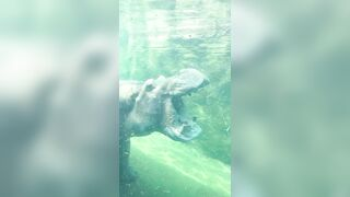Larger Than U Thought: Hippo